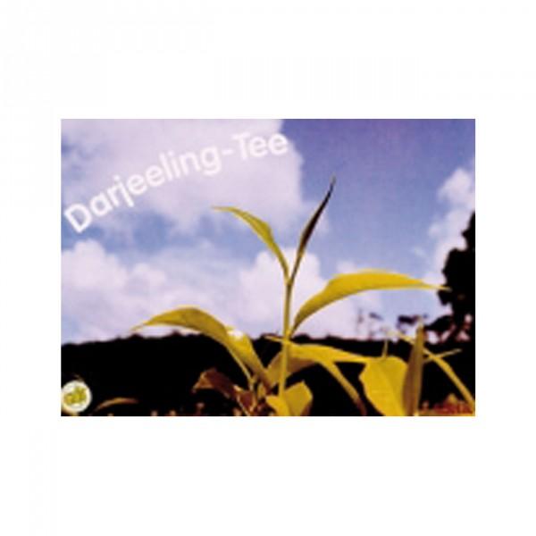 Plakat Tee A3 Motiv Darjeeling