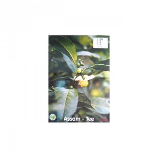 Plakat Tee A3 Motiv Assam